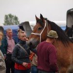 konie10