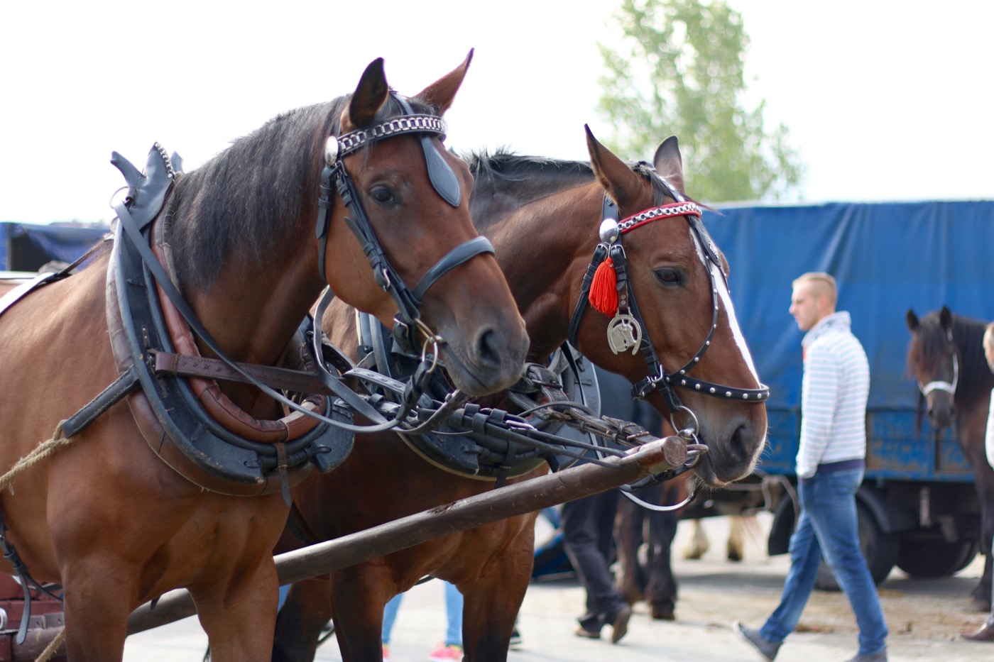 Ogólnopolskie Targi Końskie w Pajęcznie [ZDJĘCIA]