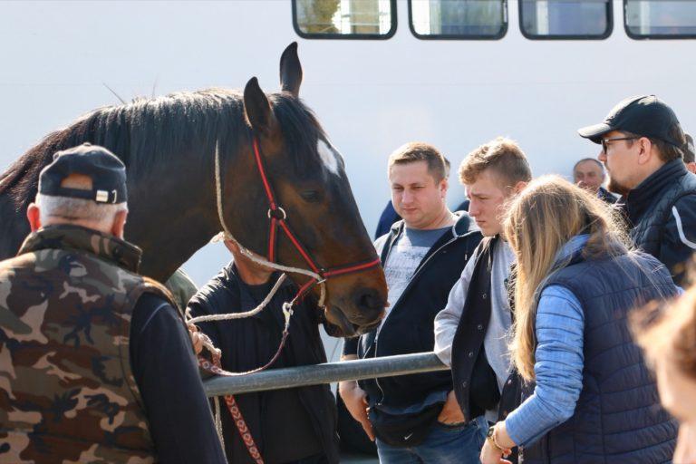 Ogólnopolskie Targi Końskie w Pajęcznie odbędą się jesienią