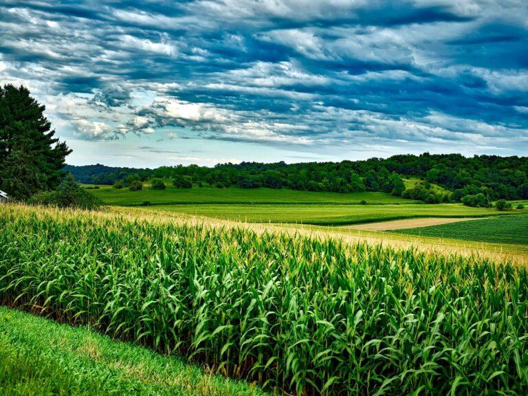 Rolnik musi mieć pecHa… pod kontrolą